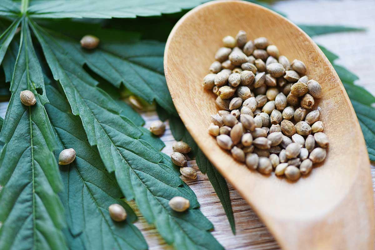 Best Marijuana Seeds
