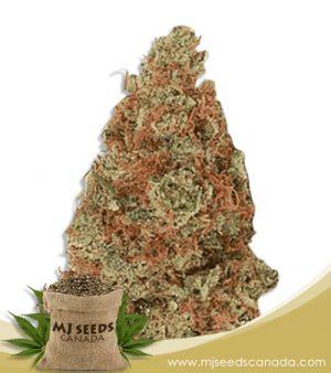Mochalope Marijuana Seeds Regular