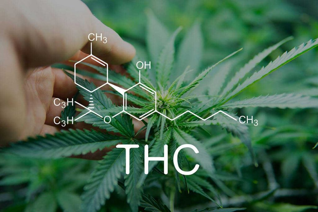 10 Low THC Strains of Cannabis