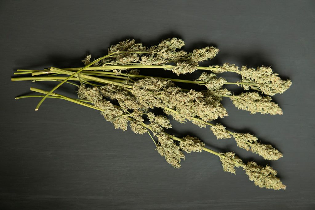 Drying Cannabis Comprehensive Tutorial