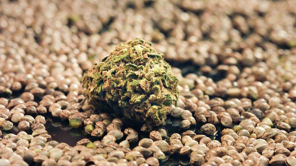 How to Feminize Seeds with Aspirin