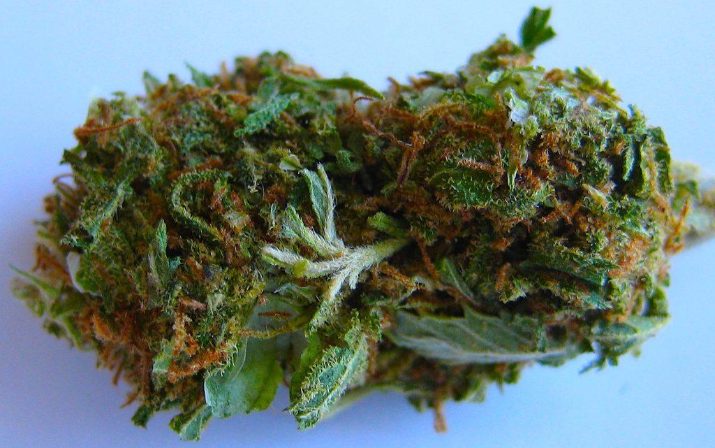 what is skunk weed
