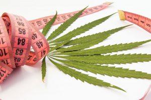 Marijuana Diet