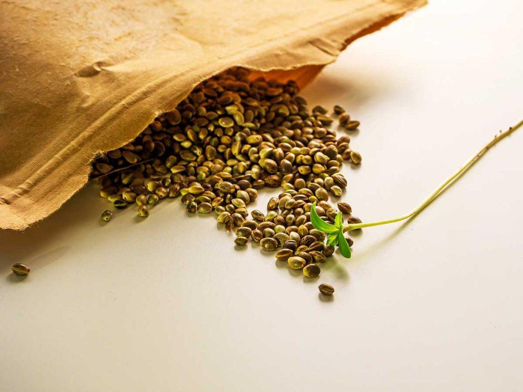 Buy Autoflowering Marijuana Seeds from Canada