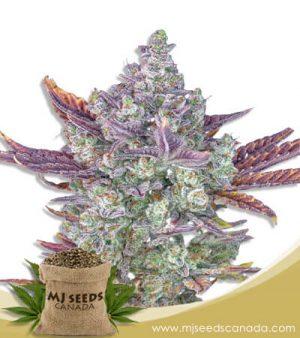 Gorilla Chip Feminized Marijuana Seeds