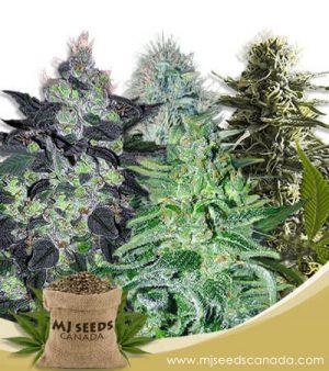 Auto Mix Marijuana Seeds