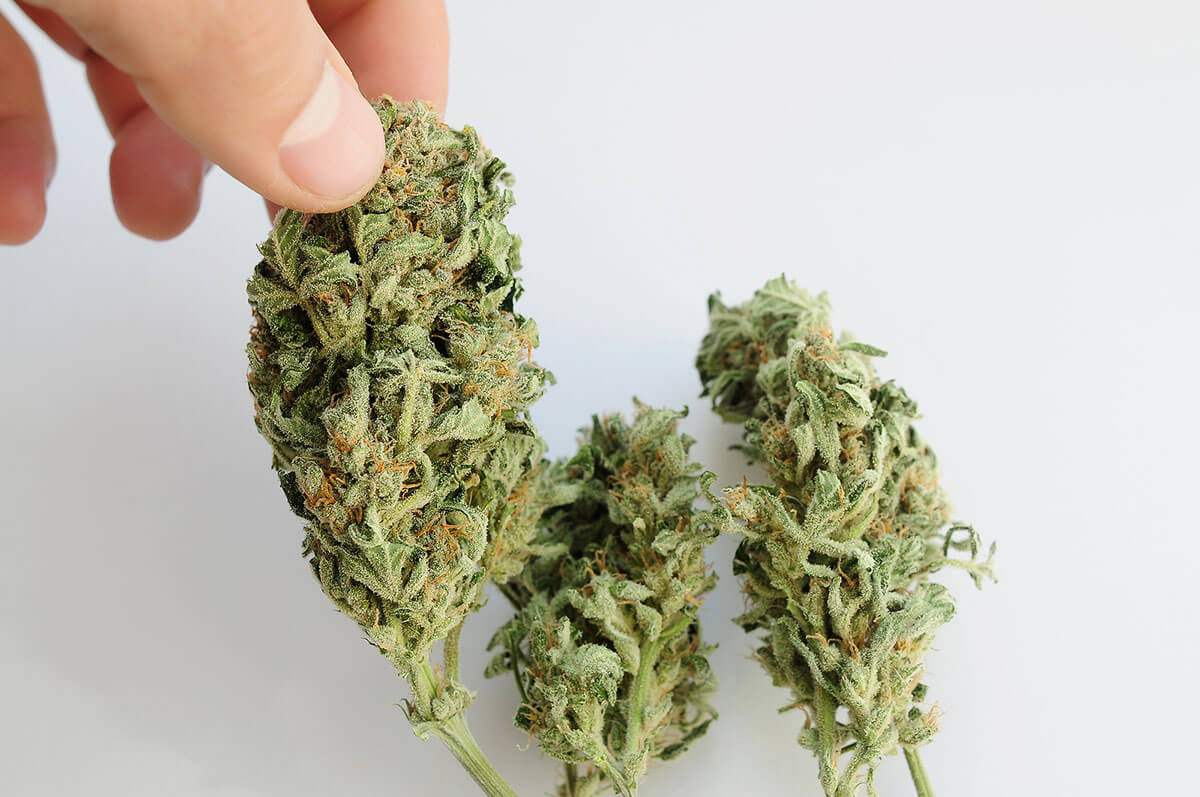 Asthma and Marijuana: Are they Compatible?