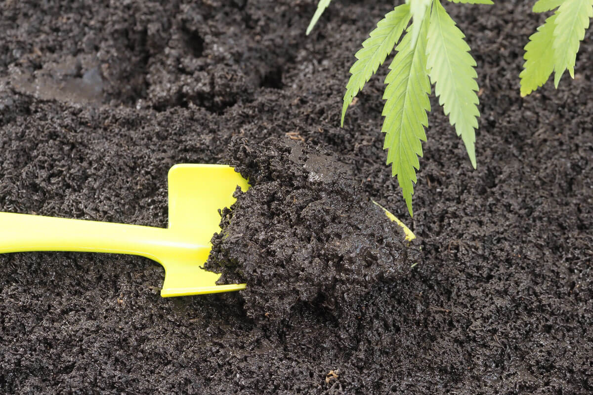 Best Nutrients for Cannabis: A Must-Have List for Growers