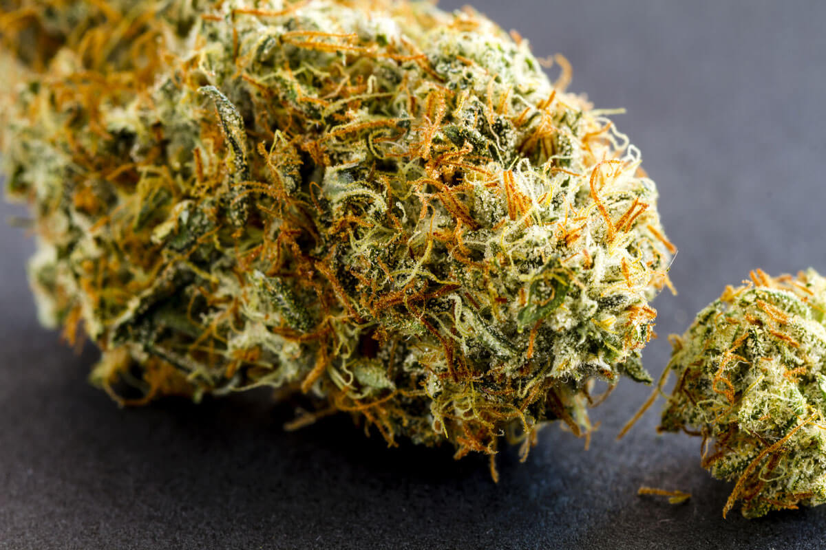 Haze and Kush Strains: What is Their Difference?