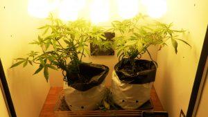 diy stealth grow box
