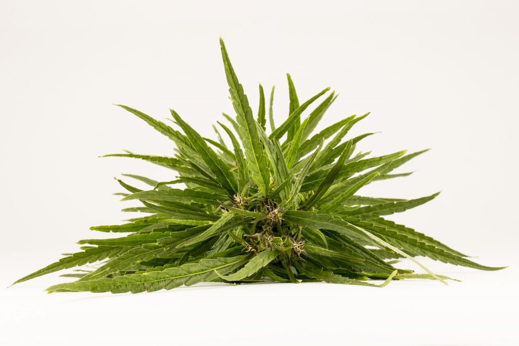best weed for pain